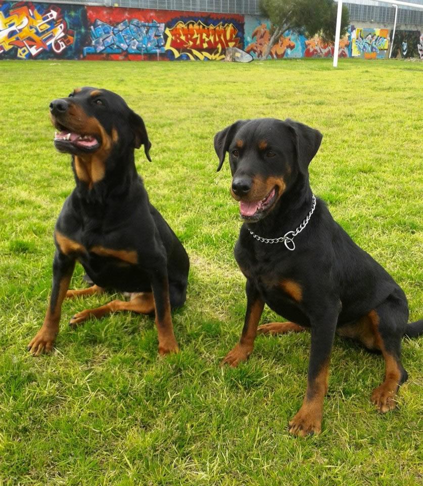 agreessive dogs off lead
