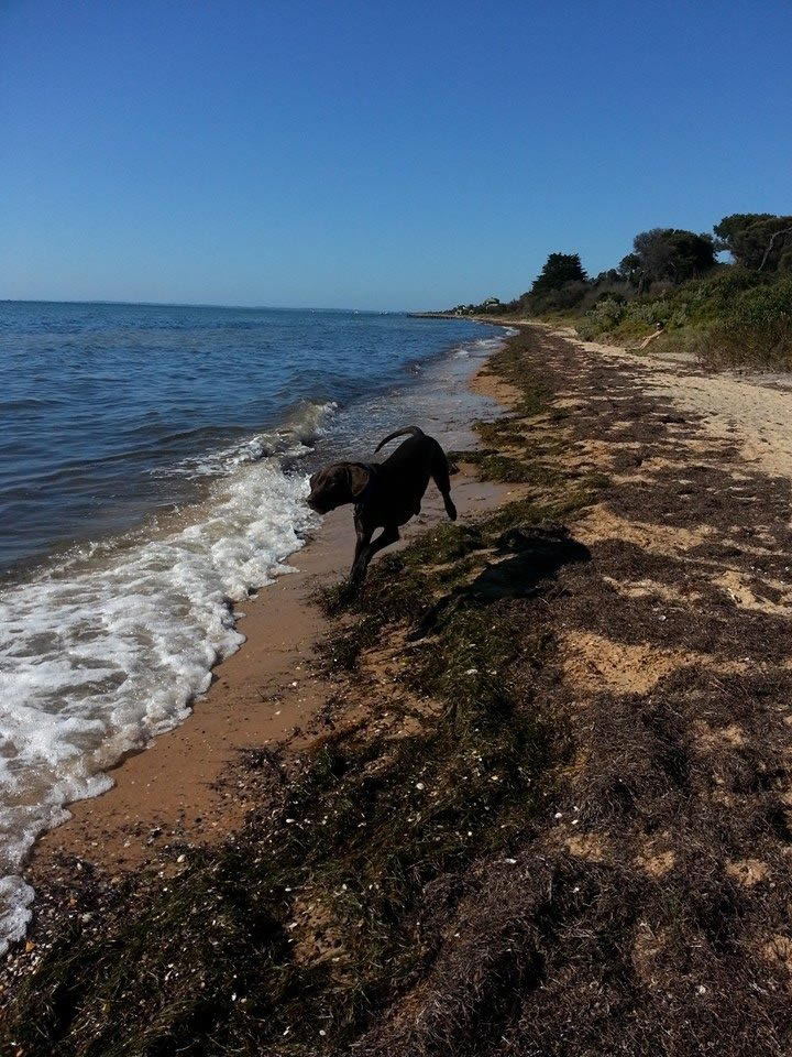 Cadbury Beach