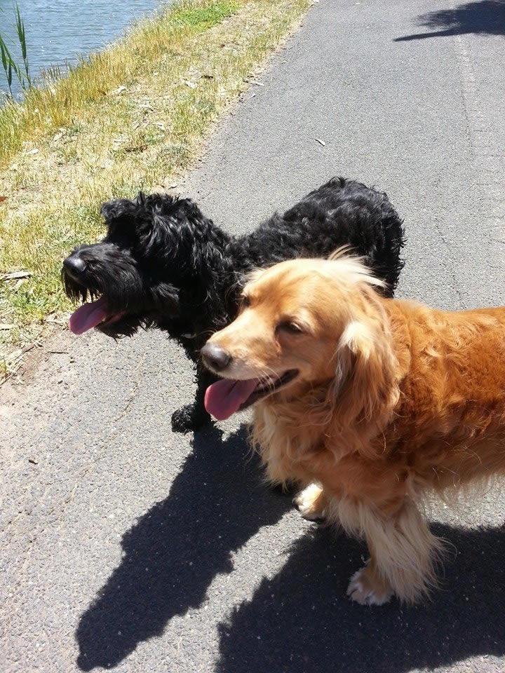 Darth and Leah walk