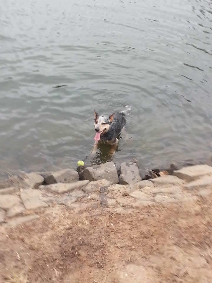 Tama in water