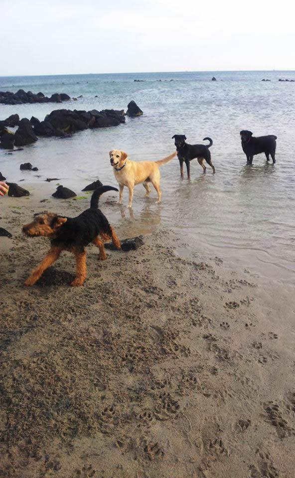 beach line up