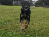 Arty running in park