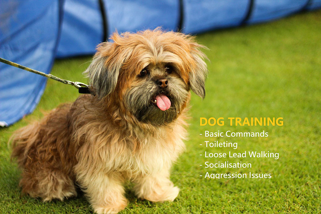 Dog-training2