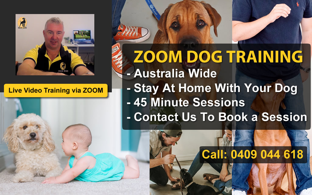 zoom-training